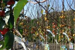 groothandel-planten.8365a2b9