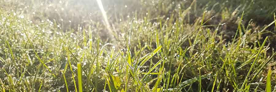 Voorjaarsbeurt tuinonderhoud hoveniersbedrijf