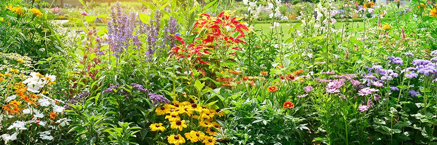 Beplantingsplan met bloei in elk seizoen