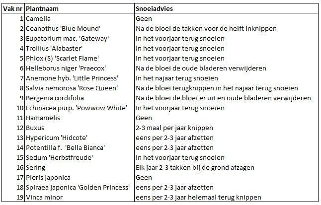 Beplantingsplan - snoeiadvies hoveniersbedrijf Martin Dunnink