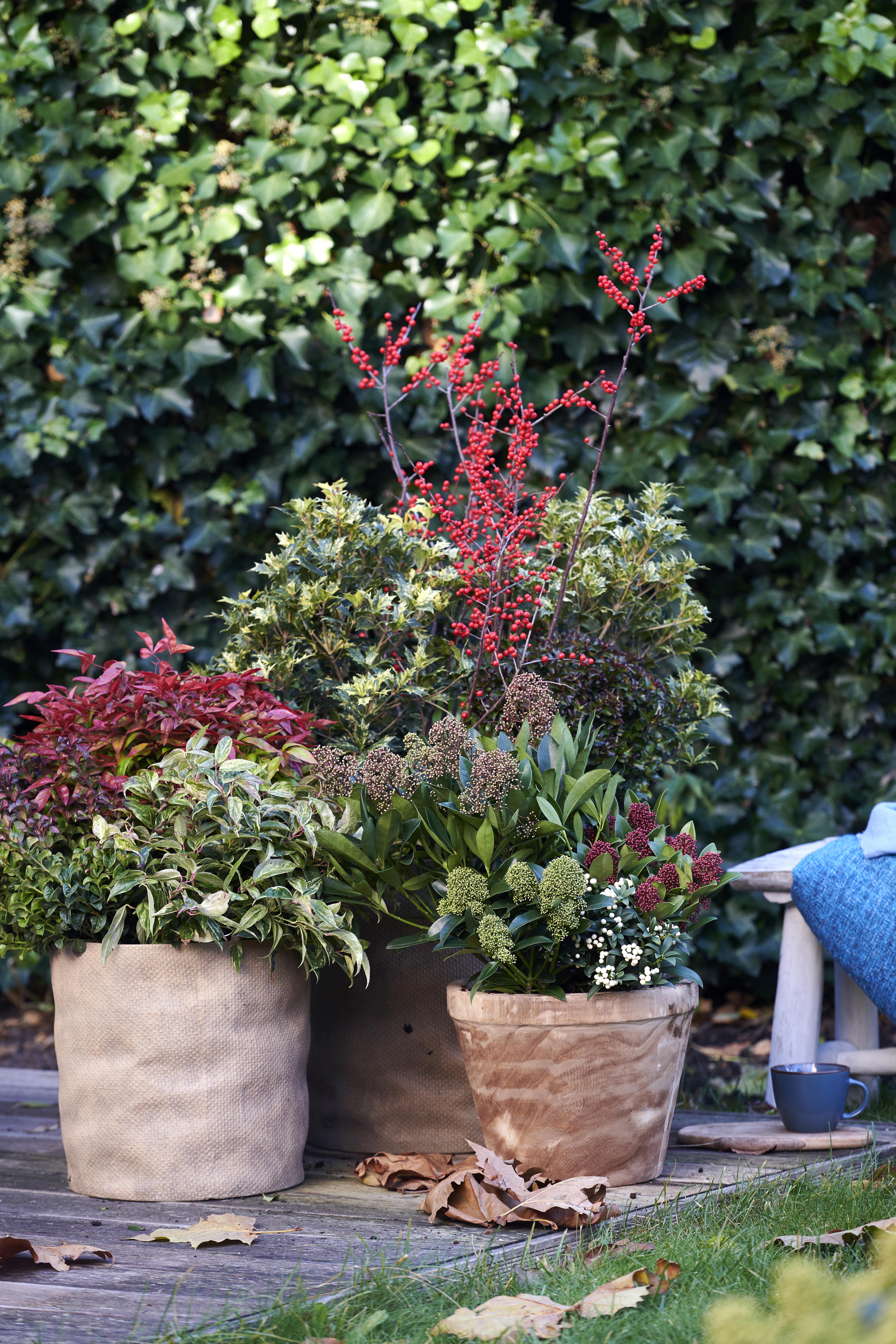 Rode Tuinplanten: Tuinplanten van de maand november 2019